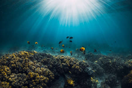 Underwater wildlife with corals, fish and sun rays in tropical blue ocean