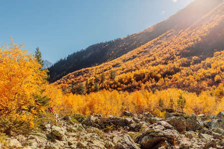 Mountains and autumnal forest with sunshine. High mountain landscape