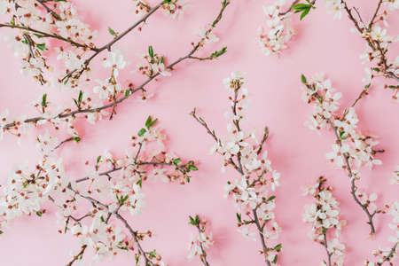 Spring pattern of branches with spring flowers on pink background. Flat lay, top view. Фото со стока