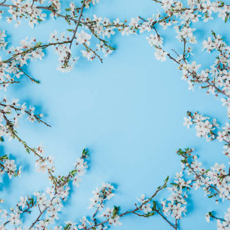 Floral frame of blooming spring white flowers isolated on blue background. Flat lay, top view. Spring time background. Фото со стока