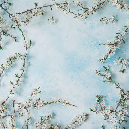 Floral frame with blooming spring white flowers on blue background. Flat lay, top view. Spring time background.