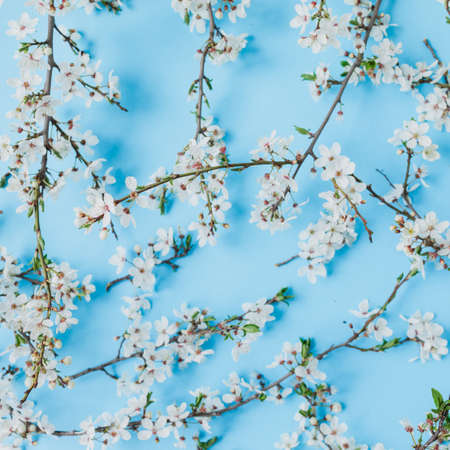 Floral pattern of blooming spring white flowers on pastel blue background. Flat lay, top view. Spring time background.