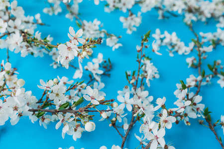 Floral pattern of spring blooming white flowers on blue background. Flat lay, top view. Spring time background. Stock fotó