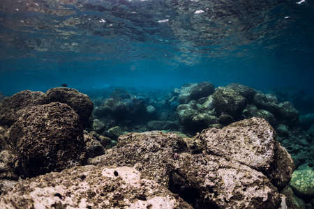 Underwater scene with corals, fish, rocks and sun rays. Tropical sea Stock fotó