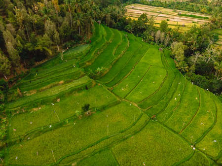 Aerial view with rice terraces. Rice fields in Bali.