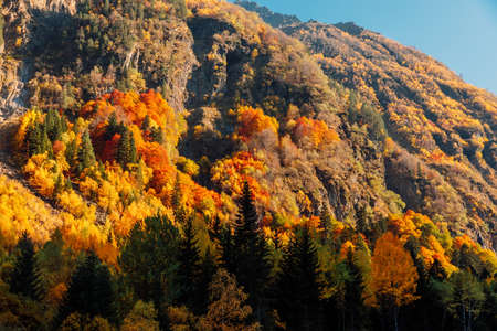 Autumnal trees with colorful leaves in mountain forest and sunlight Stock Photo
