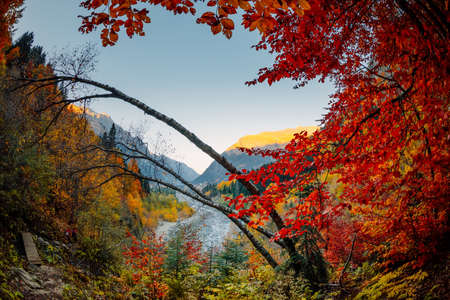 Autumnal trees with bright leaves in mountain forest