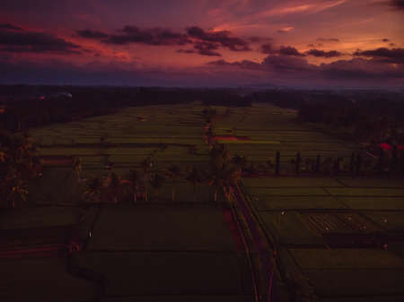 Rice plantation with sunrise colors in tropical Bali