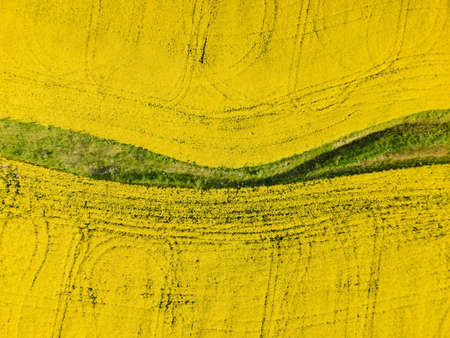 Blooming yellow rapeseed field with evening light. Aerial view with field textures