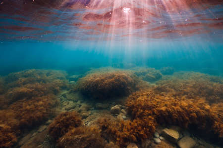 Underwater scene with seaweed, sun rays and transparent ocean water.