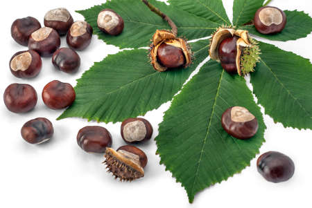 horse chestnuts: Horse Chestnuts with leaf on white background.