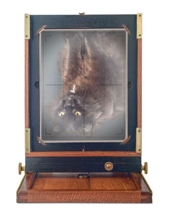 appears: Beautifully crafted, vintage, wood and brass camera, viewed from behind, isolated on white background. Old fashioned tomcat Benjamin caught in selfie action. Image appears upside down and reversed on ground-glass focusing screen. Stock Photo