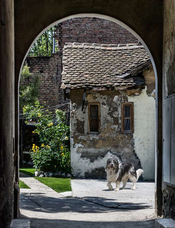 pauperism: Bearded Collie standing and looking at the camera, but doesnt make a good watchdog. Passage to a small courtyard and an old ruined house.