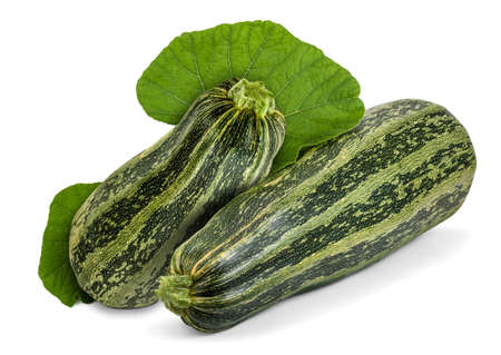 cocozelle: Two fresh striped zucchini with leaves isolated on white. Cocozelle Summer Squash (Cucurbita pepo) have excellent flavor for all regular zucchini uses.
