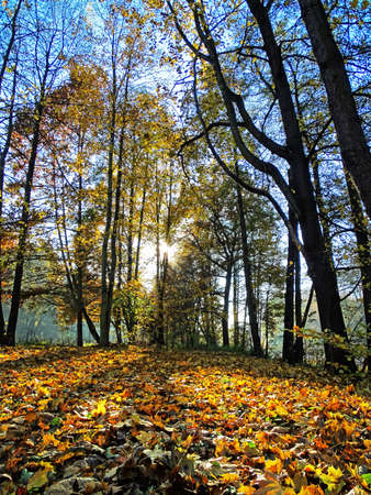 autumn Glade in the Stock Photo