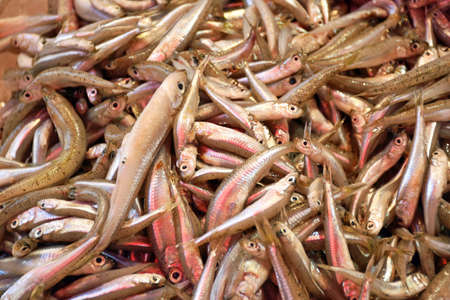 Many tiny fish are on sale at a market stall in Crete (Greece) Stock Photo