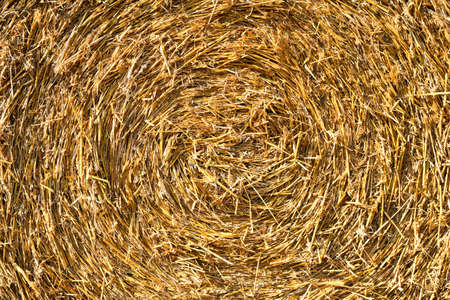 Straw pressed in a round bale