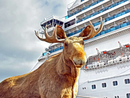 Stuffed elk in front of a cruise ship in Kristiansand Stock Photo