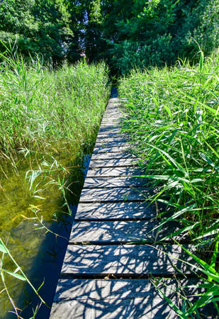Narrow boat jetty between reeds 版權商用圖片