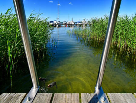 Swimming area with jetty and swim ladders at the Fleesen Lake in Mecklenburg-Vorpommern in Germany