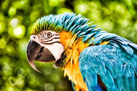Head of a colorful parrot