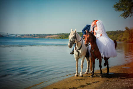 Kiss of the groom and the bride during walk in their wedding day against a white horse and brown horse