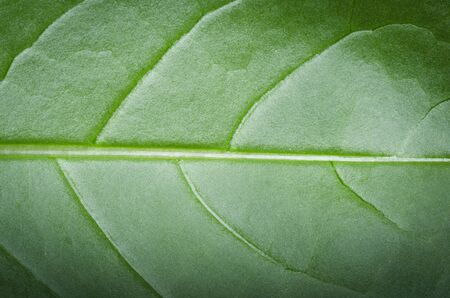 the details: Details of leaf Stock Photo