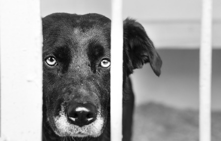 dog kennel: dog at the shelter. Stock Photo