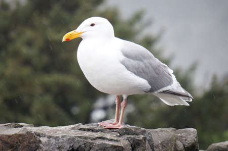 Seagull sitting on ledge photo