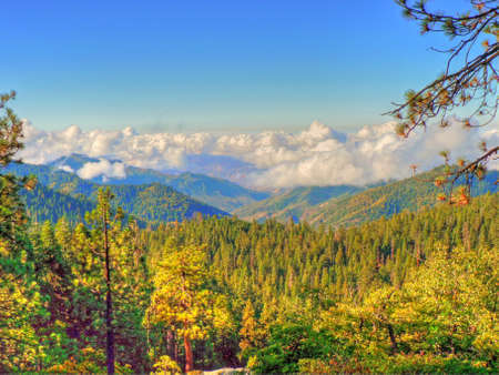 Sequoia National Forest Stock Photo - 12072441