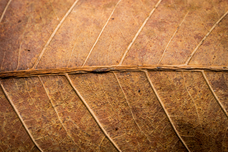 redness: Dried leaf texture Stock Photo