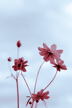 two tone: flowers and sky with two tone color