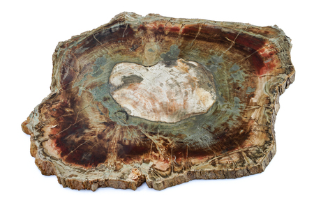 fossil: Large piece of fossil wood isolated Stock Photo