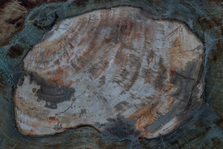 fossil: background and texture of fossil wood