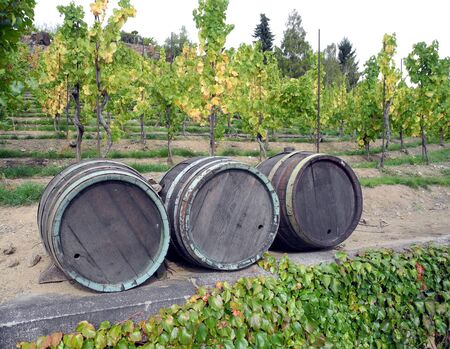 iron hoops: Old damaged casks wine used as decoration on the vine.