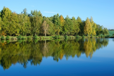 mirroring: Mirroring a small grove of trees in the water pond. Stock Photo