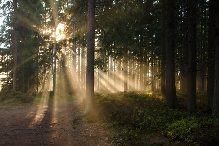 Sunlight shining through the trees and creating an interesting effect.