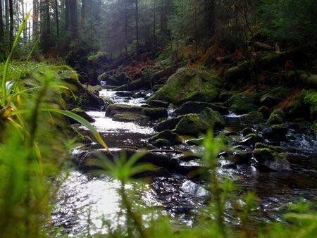 swish: Mountain stream in the forest with moss on large stones. Stock Photo