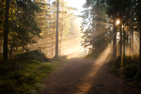 lumen: Afternoon autumn light while walking on a path in coniferous forest.