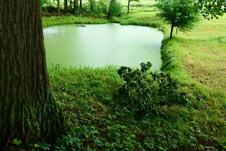 tinge: A small pond on the edge of the green tinge.