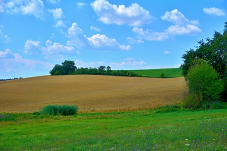 Fields, meadows, trees and bushes in the middle of Bohemia. Stock Photo