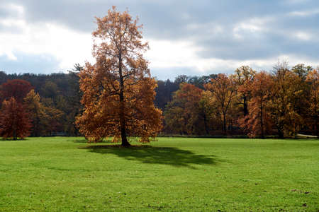 A tall deciduous tree in a park in the center of the capital city of Prague.