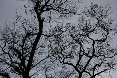 sillhouette: Tree sillhouette under raincloud