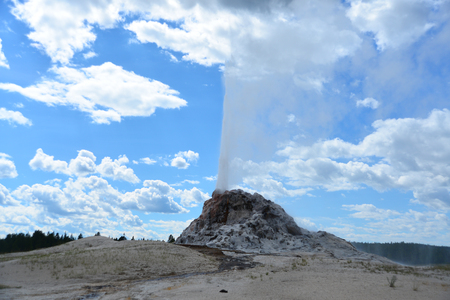 eruption: Eruption of White Dome Geyser at Yellowstone National Park