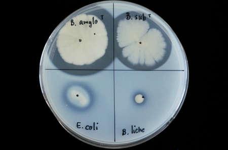 Nutrient agar photo