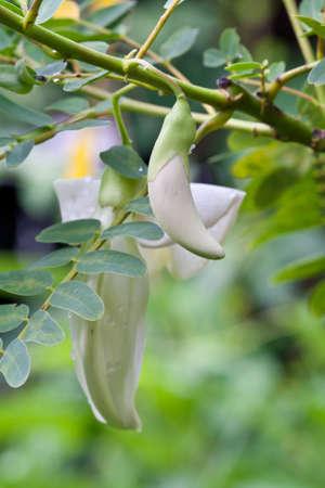 Verduras colibr� en el �rbol Foto de archivo - 10272231