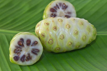 morinda: Noni fruit on banana leaf