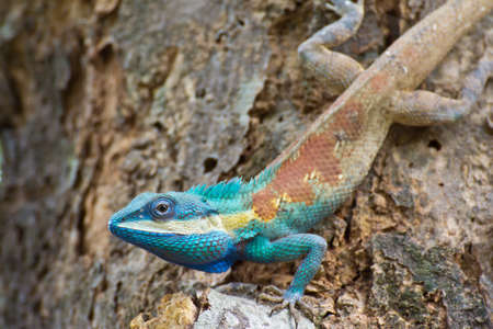 Lizard on the tree  photo