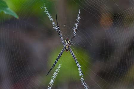 arachnoid: Spider on a web