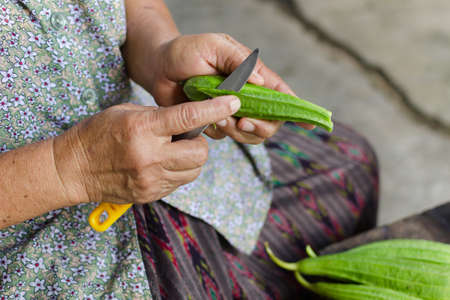 angled: Women hand cutting Fresh angle gourd or Angled gourd,Thailand